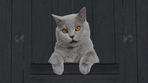 cat at fresh asses