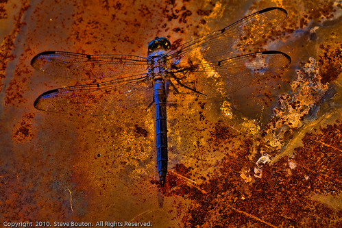 The Rusty Dragonfly