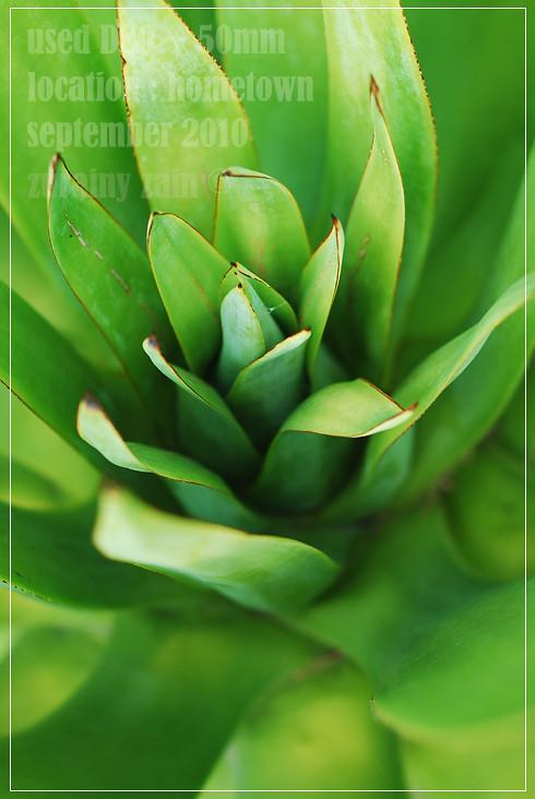 Green Leafs - Daun #2