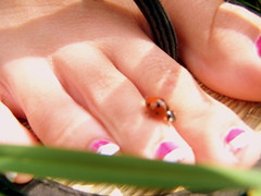 Lady bug landed on my foot (tastetherainbow5387) Tags: pink red white black grass foot toes ladybug