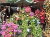 Flower market in Old Nice
