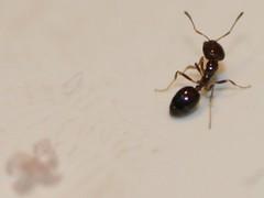 Ant antics - don