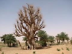 IMG_5280.jpg (Cooperación Médica Canarias Sahel) Tags: lago ramsar humedal gabou