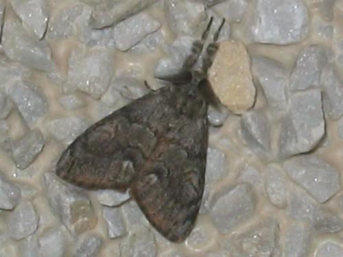 Cute moth
