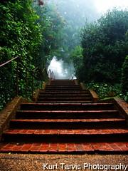 Steps at Monticello, Virginia (kurttavares) Tags: trees mountain mountains brick fog way photography virginia vines kurt thomas walk cement steps walkway jefferson appalachian railing monticello bushes appalachia tarvis