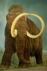 Mammoth at Flickr.com