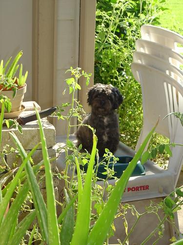 Oakie on a Sunny Monday 2003