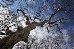 RSP_1841 (Tom Kostro) Tags: park nyc winter sky cold tree clouds riverside upperwestside