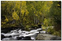 Bishop Creek Magic I (A Camera Story) Tags: california fallcolors fallfoliage sierranevada southlake easternsierra bishopcreek tamron1750mmf28 aspendell sonydslra700 sabrinalakebasin