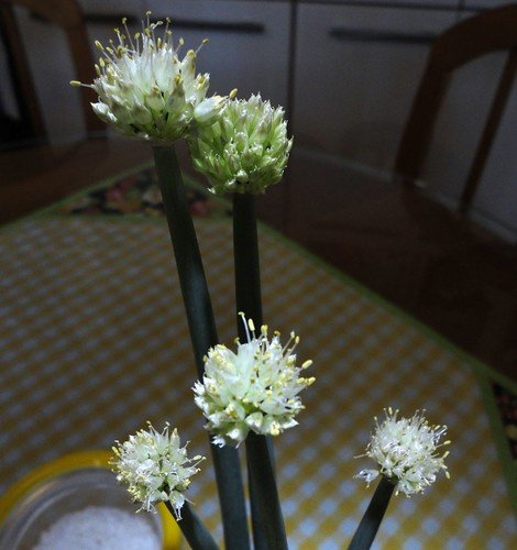 Flores de cebolinha