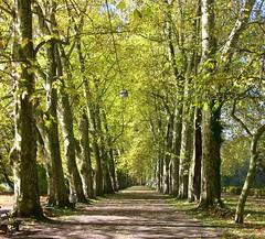 Tbingen , die 180 Jahr alte Platanenallee im Herbst  - 051 (roba66) Tags: trees bume allee tbingen baw baumallee platanen platanenallee platinumphoto colorphotoaward imlndle