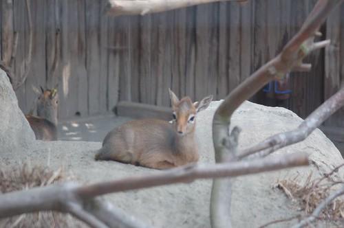 zoo june '070055