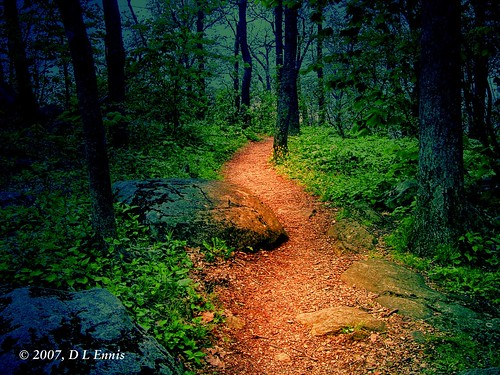 Fantasy Forest Trail