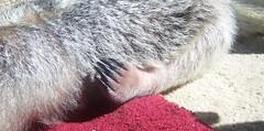 Stewie foot