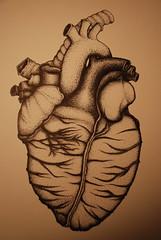 DSC_0011 (jreidfive) Tags: art illustration pen ink virginia heart drawing roanoke freehand draw stipple anatomical