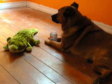 a dog, his peanut butter, and a crocogator
