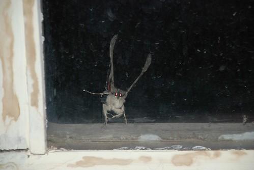 tap dancing moth 2