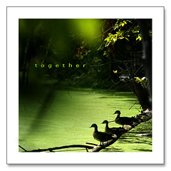 T o g e t h e r (Imapix) Tags: nature animal photo duck bravo photographie searchthebest together wilderness canard imapix themoulinrouge naturesfinest gaetanbourque branchu wooduck infinestyle goldenphotographer canardhuppe imapixphotography gatanbourquephotography