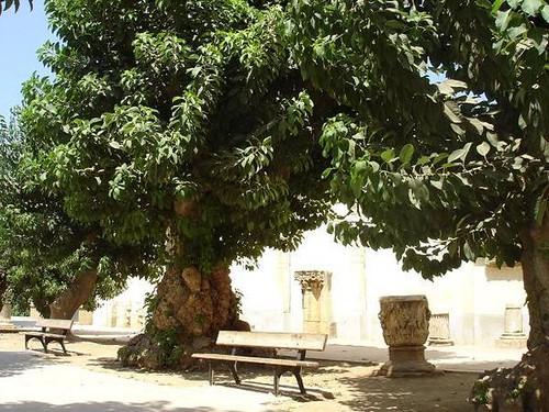 الجزائر من بين اجمل 10 بلدان العالم 1383445998_4ac683a1f