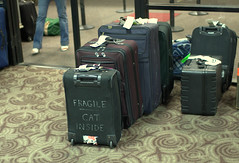 like emotionally fragile?? (ally millar) Tags: arizona sky phoenix cat lost harbor airport nikon funny luggage inside suitcase fragile d40