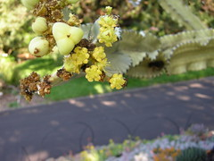the Sydney royal botanical gardens ()x(Nato)x() Tags: gardens botanical nikon sydney australia nsw coolpix p5000