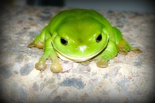 04/365 Hellloooo Mr Frog ... | Flickr - Photo Sharing!