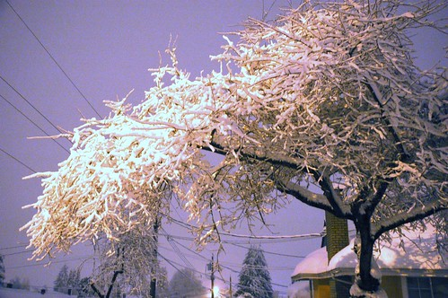 Surviving tree - colour corrected