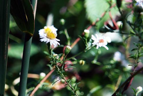 central park wild flowers 01
