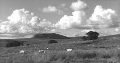 Pen-y-Ghent (NSA66) Tags: yorkshire cumulus threepeaks limestone cloudscape dales penyghent