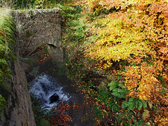 Greens And Golds. (Kingfisher 24) Tags: autumn leaves wall scotland waterfall fife ferns beech