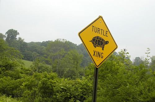 Turtle Xing