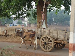 DSC00171 (Bob Halder (Bobby)) Tags: india art fauna one flora day village indian  bob ap bobby mp typical hyderabad andhra kolkata 2007 hpc pradesh thru  copyrighted bhilai chattisgarh halder 36garh