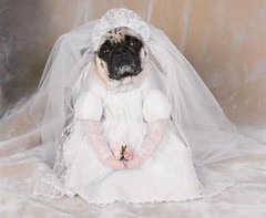The doggie bride