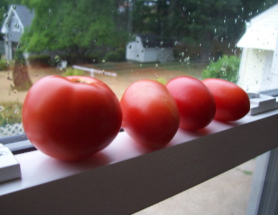tomato windowsill