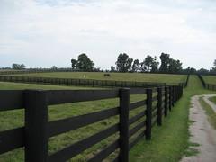 A lot of fences (spader) Tags: horses cypress threechimneys sd600