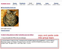 how to copy and paste a small photo into the group topic
