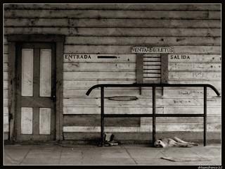 Perro y Puerta en Sepia/Dog and Door in Sepia
