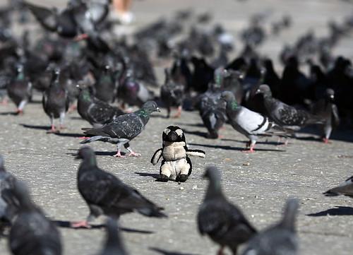 venice-pablito- y las palomas