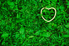 Green Heart (And the Green Grass Grows All Around, All Around) (CarbonNYC) Tags: green grass catchycolors heart symbol d70s conservation environmental tags plastic environment envy metaphor environmentalism symbolism earthday envious plasticheart carbonnyc lovetheearth symboilc
