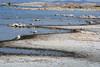 Mono Lake Shoreline with Gulls and…
