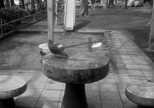 テーブルの鳩