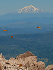 Mt. Shasta and Butterflies Taken From Lassen Peak. (StevenLPierce) Tags: california mountain northerncalifornia butterfly volcano butterflies shasta mountshasta mtshasta lassen lassenvolcanicnationalpark lassenpeak