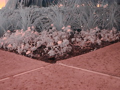 Flowerbed IR #2 (monopole2006) Tags: near infrared irvine nir