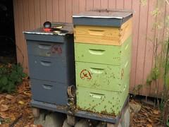 Beekeeping 2707