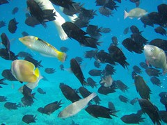 Manado fishes