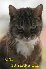 Happy birthday (Eisbeertje) Tags: cat kat happybirthday toni katze 20100512
