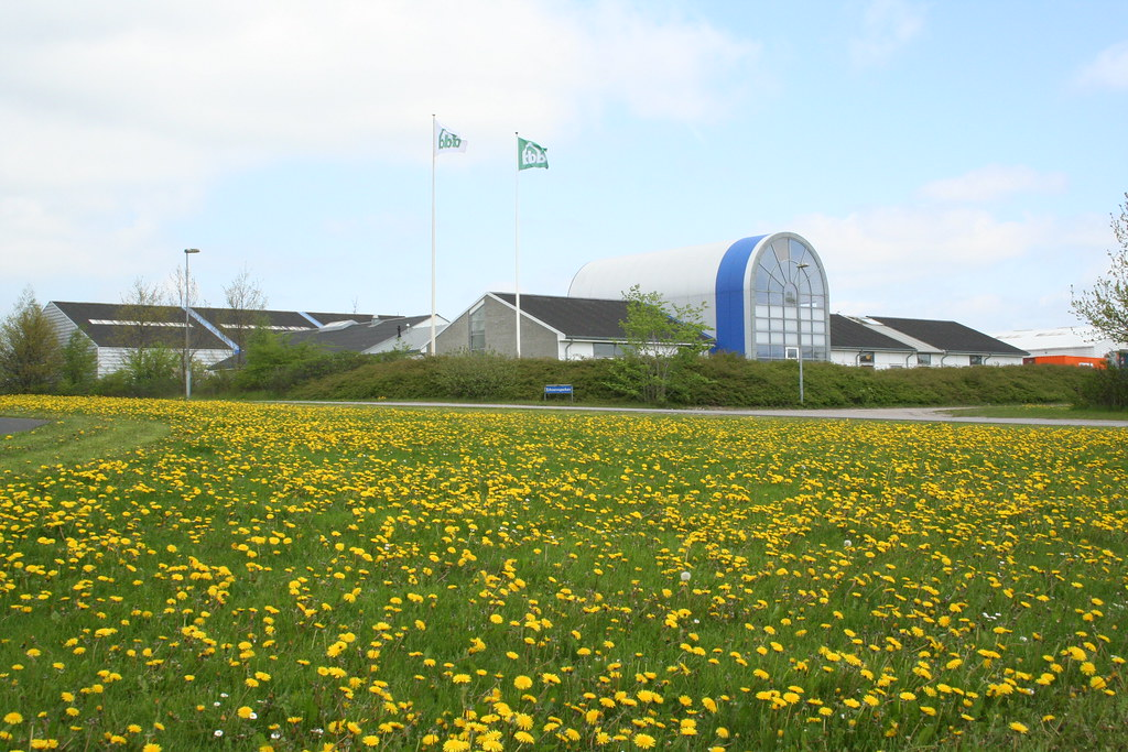 Dandelions and company buildings