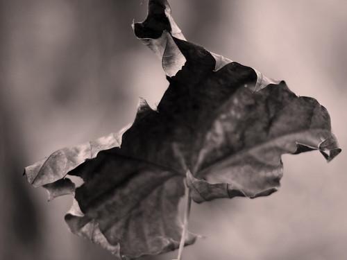 one perfect leaf