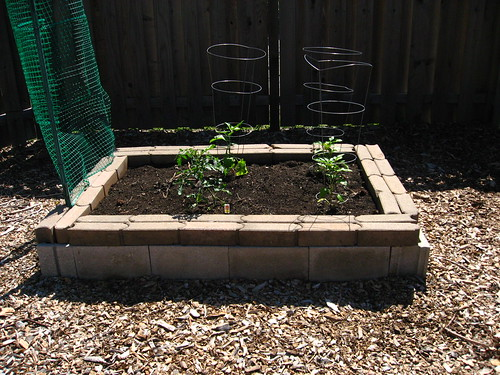 My modest raised bed