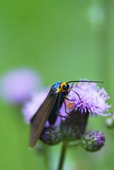 A nip of nectar - by Gavatron